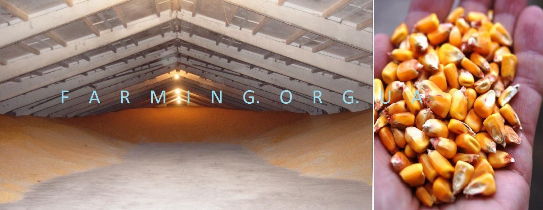 Хранение кукурузы в элеваторе ленточный конвейер 1л 80